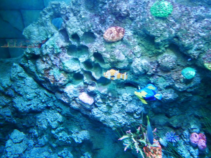 レゴランド園内 お魚