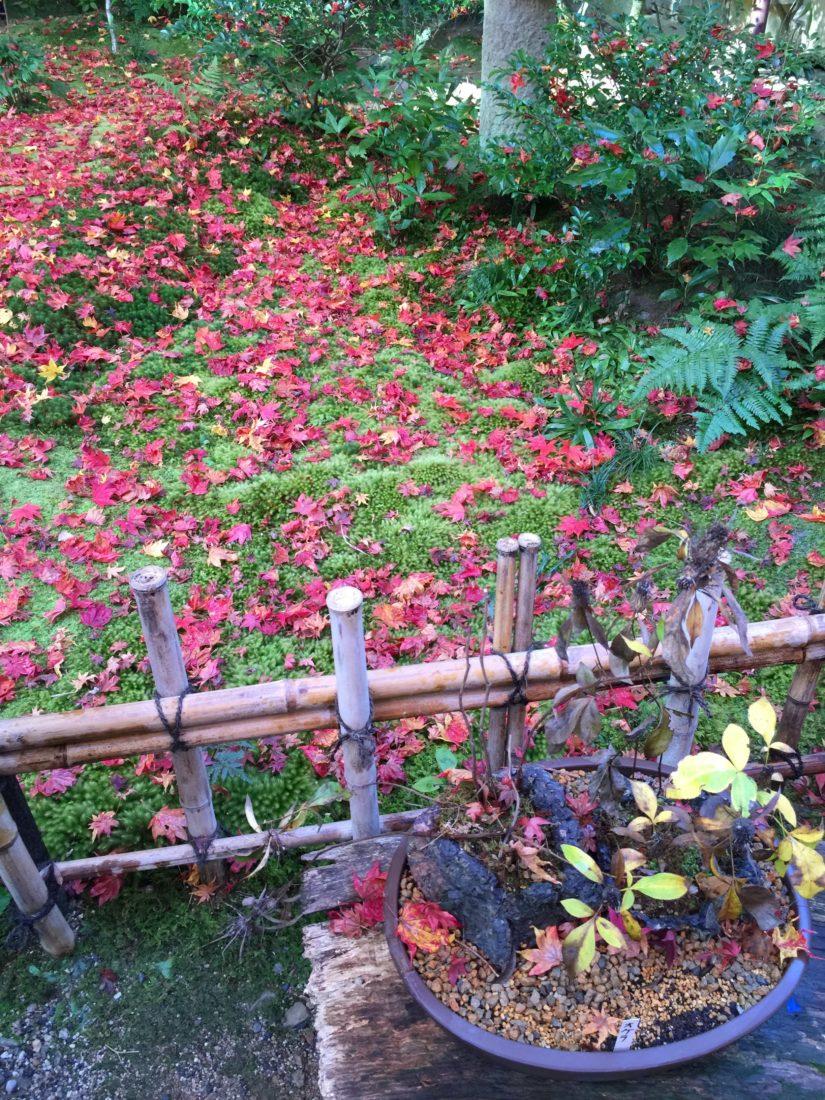 もみじの庭園